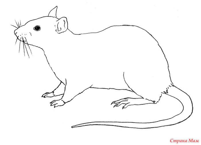 Раскраска крысу