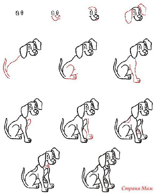 Собака. Подробная схема