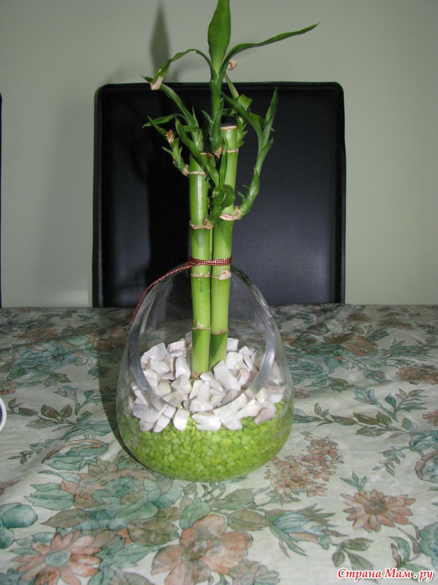 Как размножать бамбук в домашних условиях