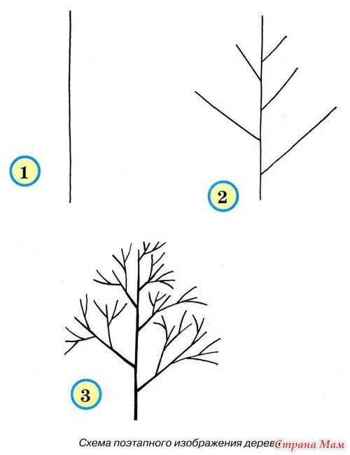 Дерево. Подробная схема