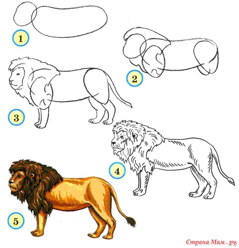 Как нарисовать льва с