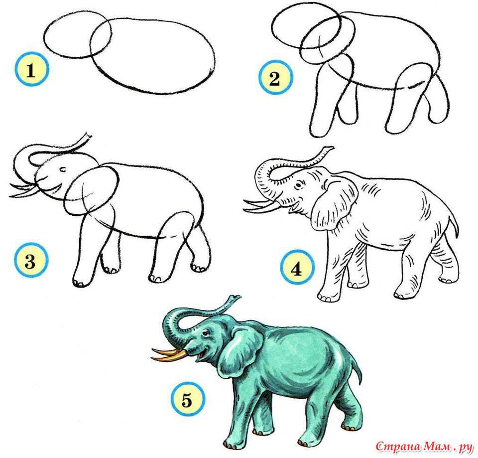 Как нарисовать всех зверей поэтапно