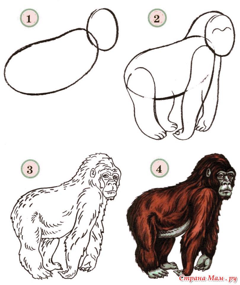 схема рисования 1, 2.