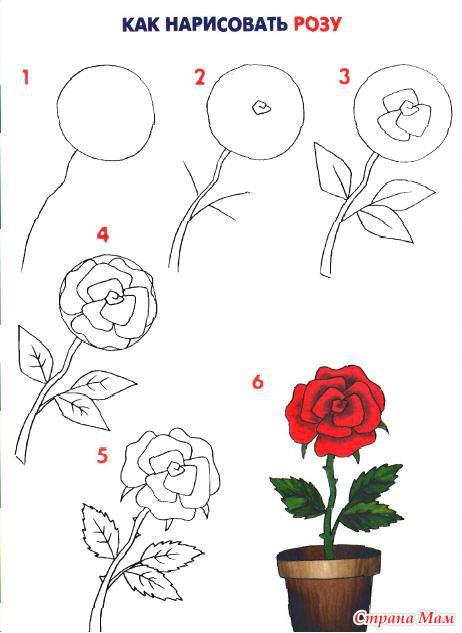 Роза. Подробная схема