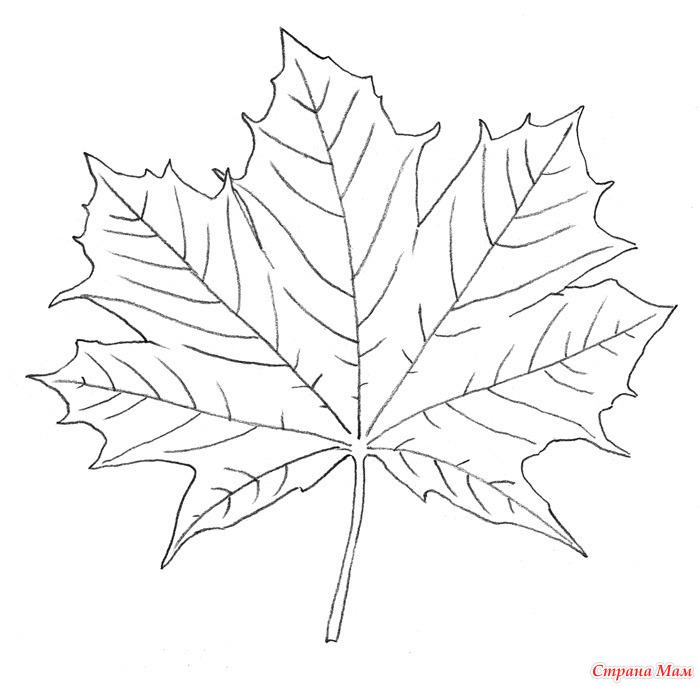 Как рисовать большие листья