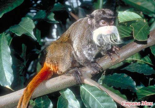 Самый необычные животные в мире