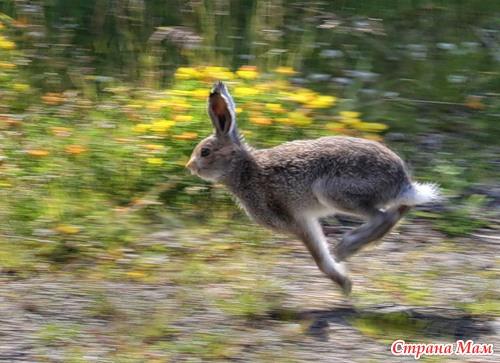 Что убегает от зайца согласно пословице