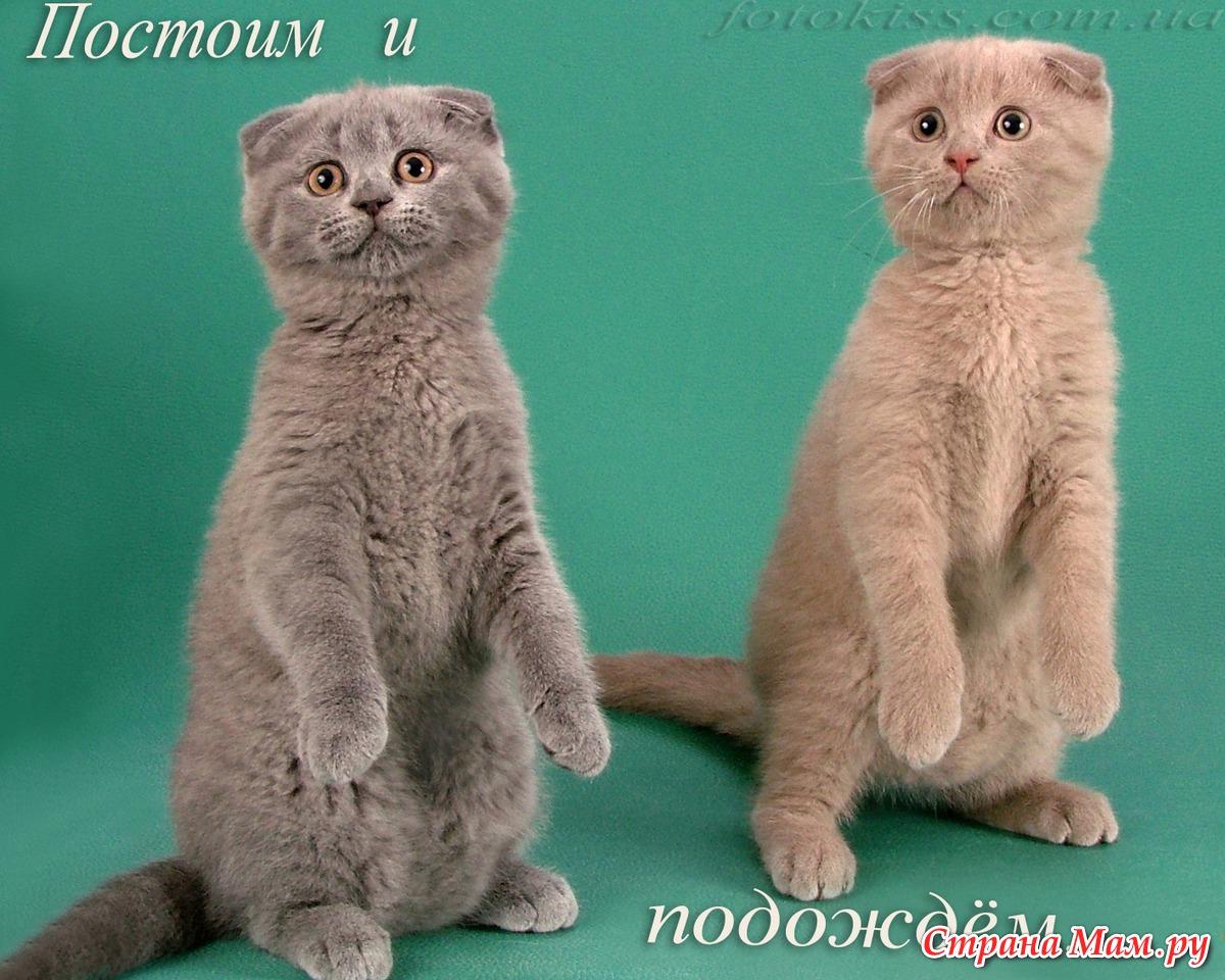 породистые кошки и котята фото