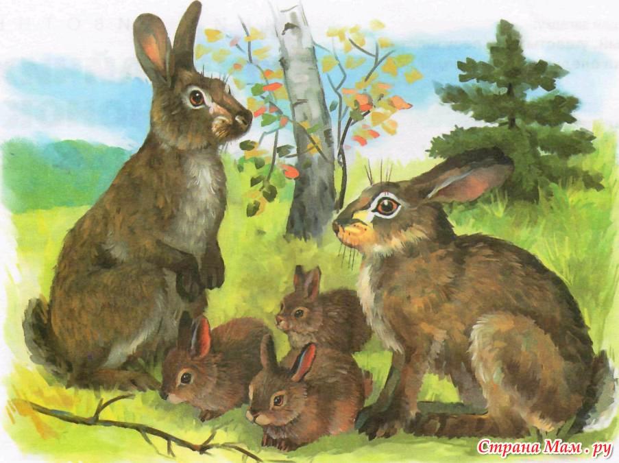 Картинки Животных Для Детей Заяц