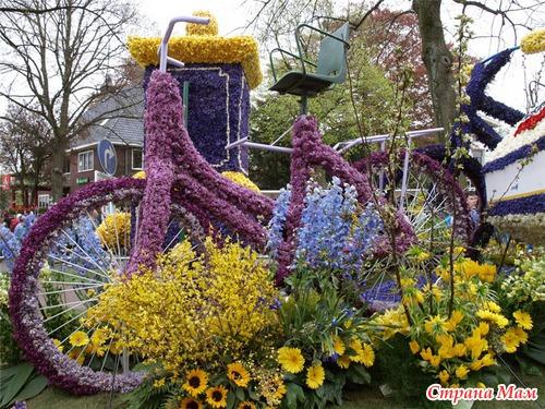 цветы из голландии фото: