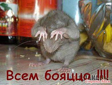 муж крыса по гороскопу