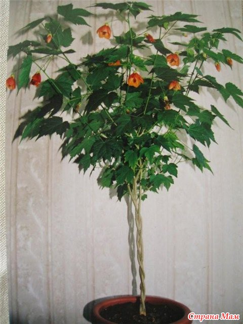 комнатные цветы по знаком зодиака