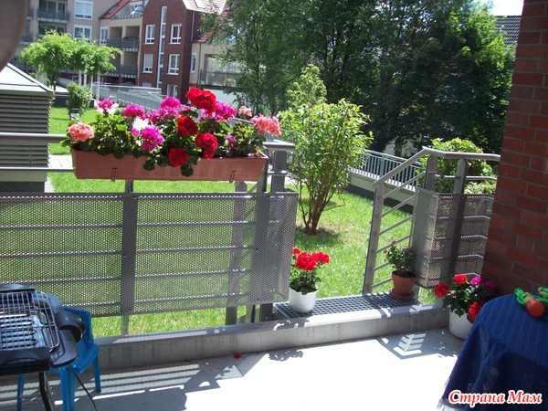 герань на балконе фото
