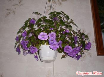 Веселая семейка цветок фото
