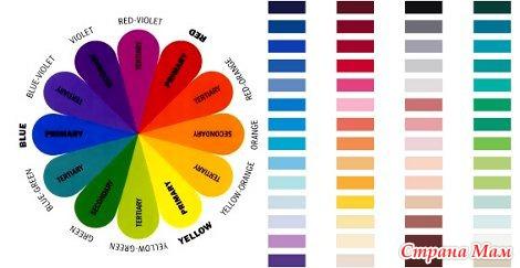 цикламен фото цвет