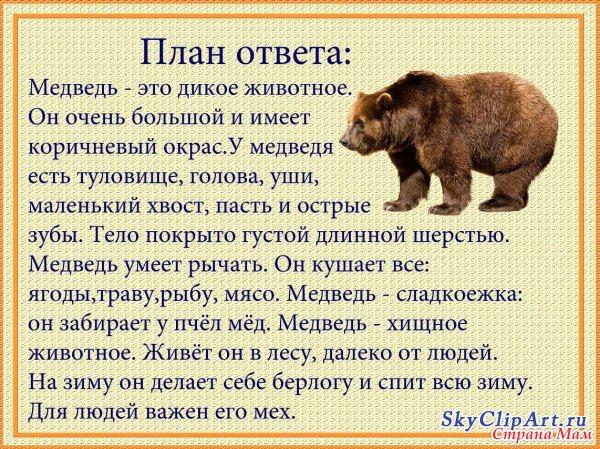 - вот медведь, он большой косолапый, медведь