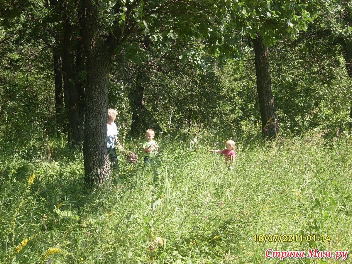 Фотосессии в лесу с ягодами 4 фотография