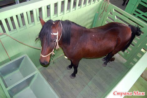 Конюшня своими руками на одну лошадь