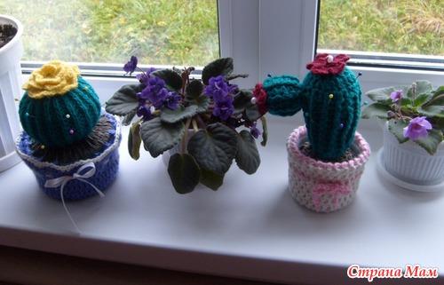Мои игольницы-кактусы.