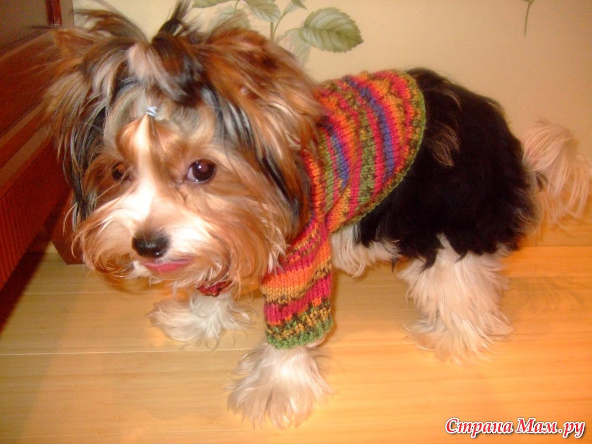 Как вязать свитер для йорка