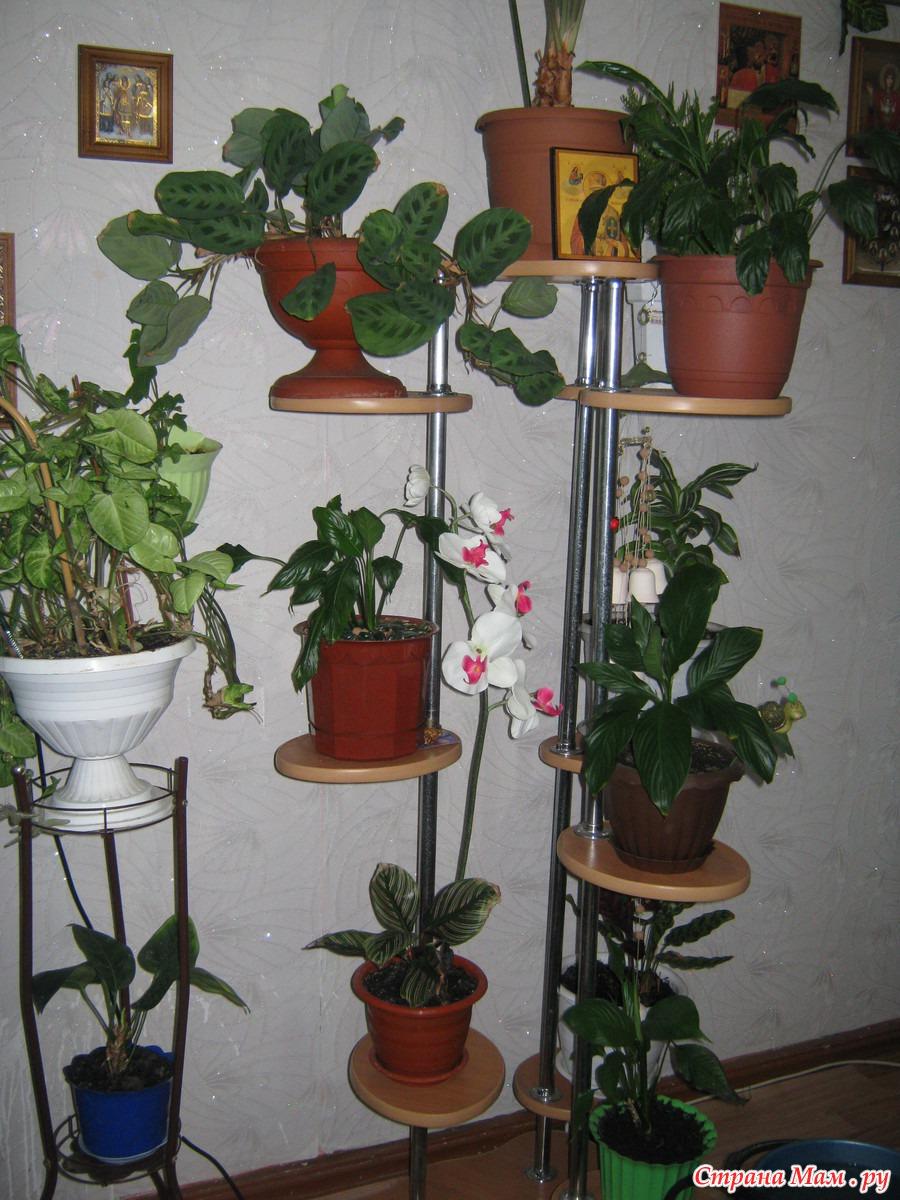 Цветы комнатные в квартире фото красивые