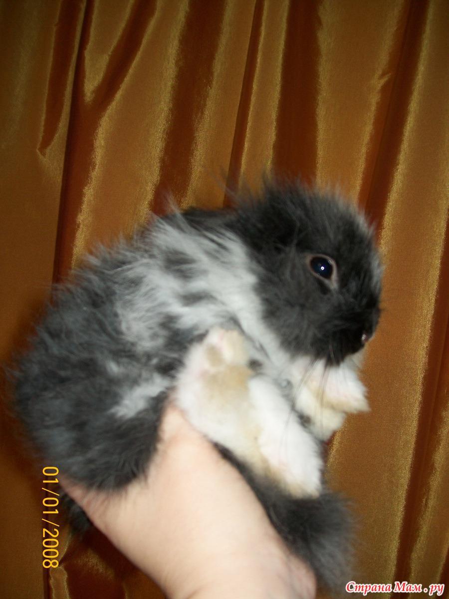 Декоративные кролики 33