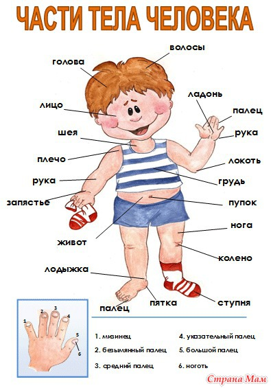 аренда квартир возраст разных частей тела ПОСРЕДНИКОВ