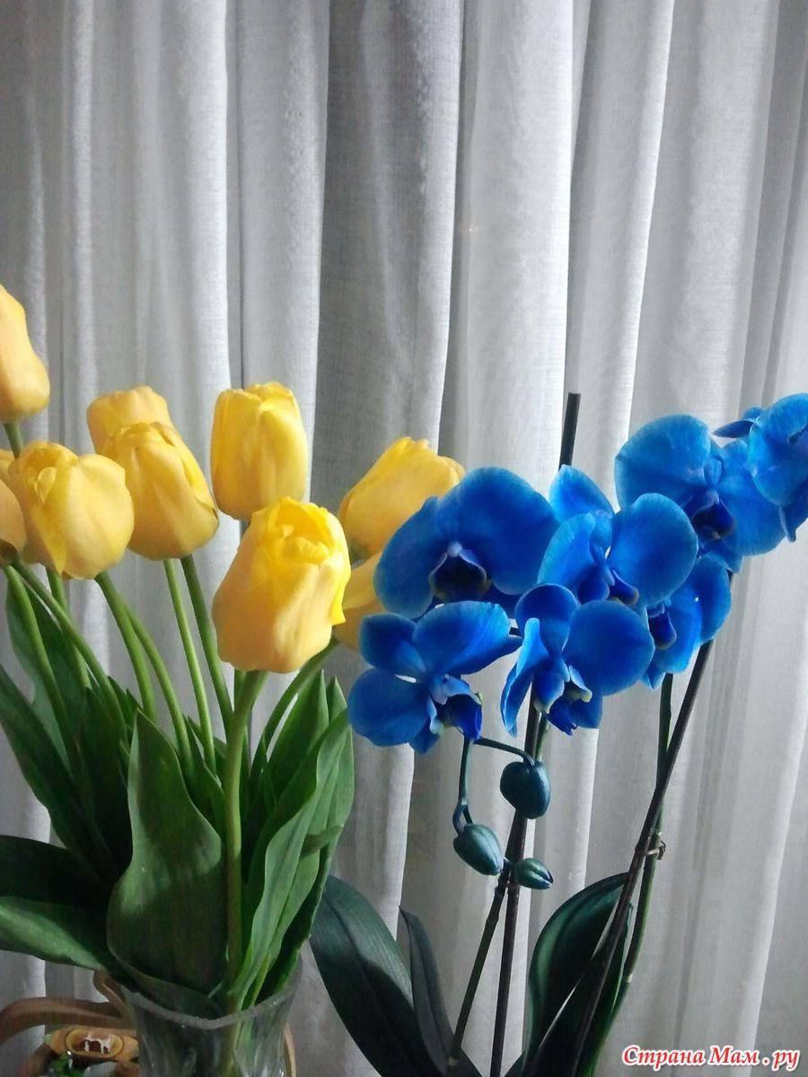 Синяя орхидея крашеная