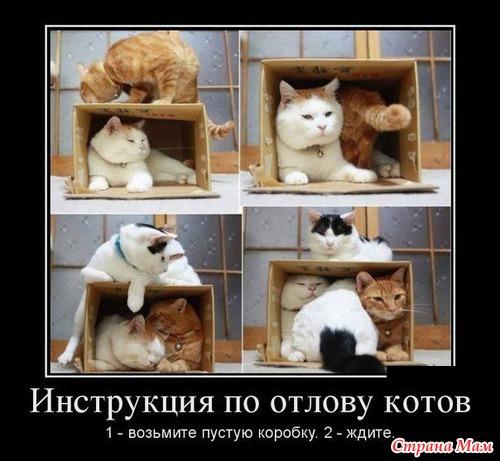 Прикол кот и коробка