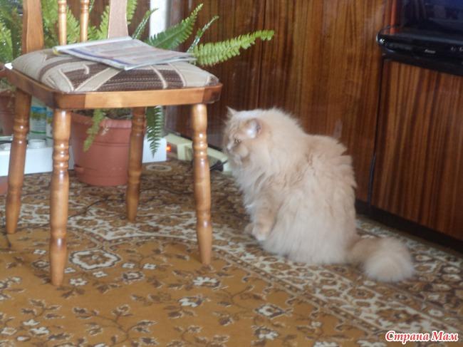 """Риолис """"Персидский кот"""""""