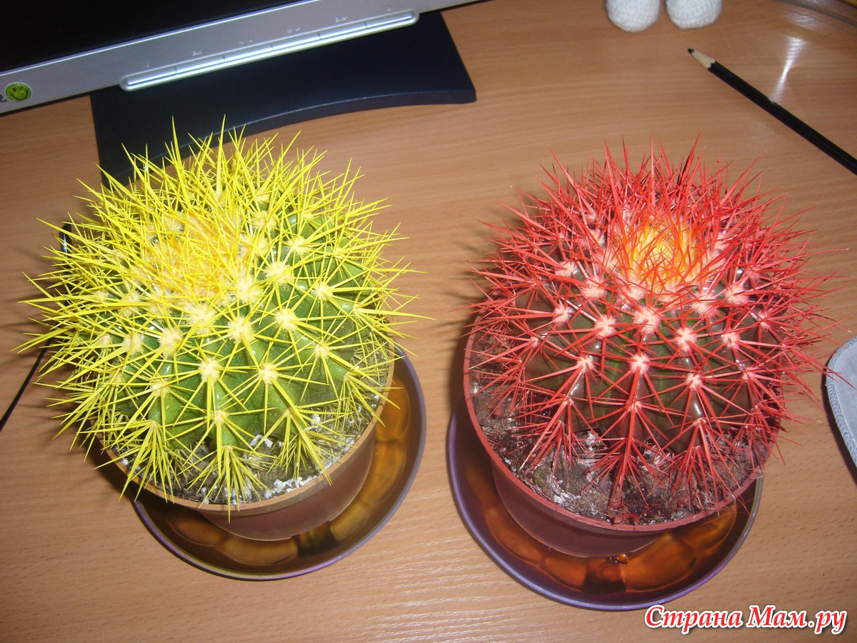 kaktus-ferro-miks