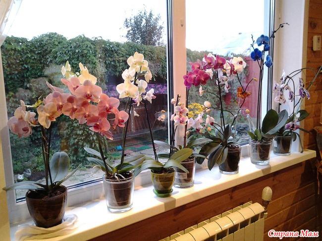 Можно ли орхидею сажать в гидрогель 91