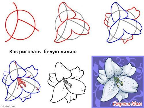 Как нарисовать цветы на стене своими руками пошагово - вы искали