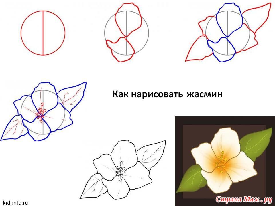 Рисовать рисунки карандашом цветы