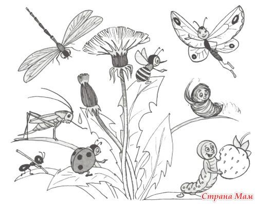 Как рисовать цветок с насекомым
