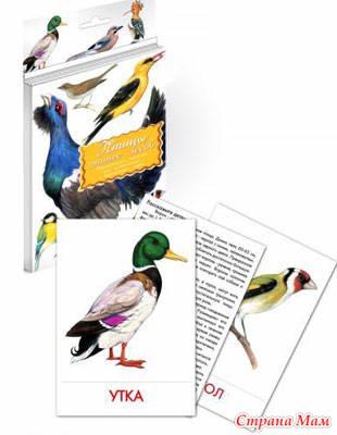 Тн птицы материал