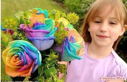 Как вырастить из семян розы