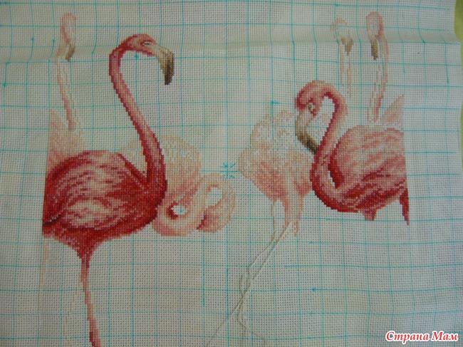 голову у одного фламинго.