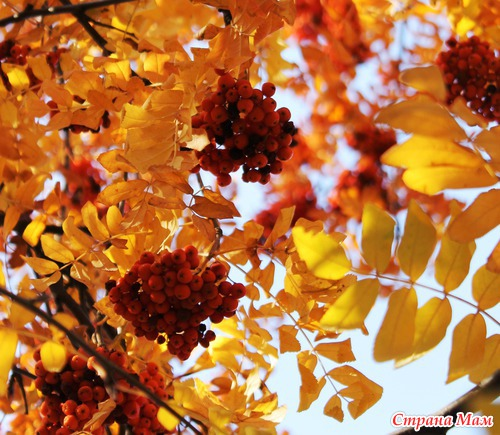 Скачать песню желтый лист осенний колибри