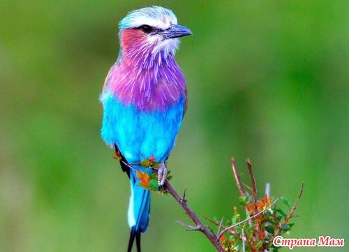 имя судебного фото картинки красивых птиц фото Несмотря отсутствие
