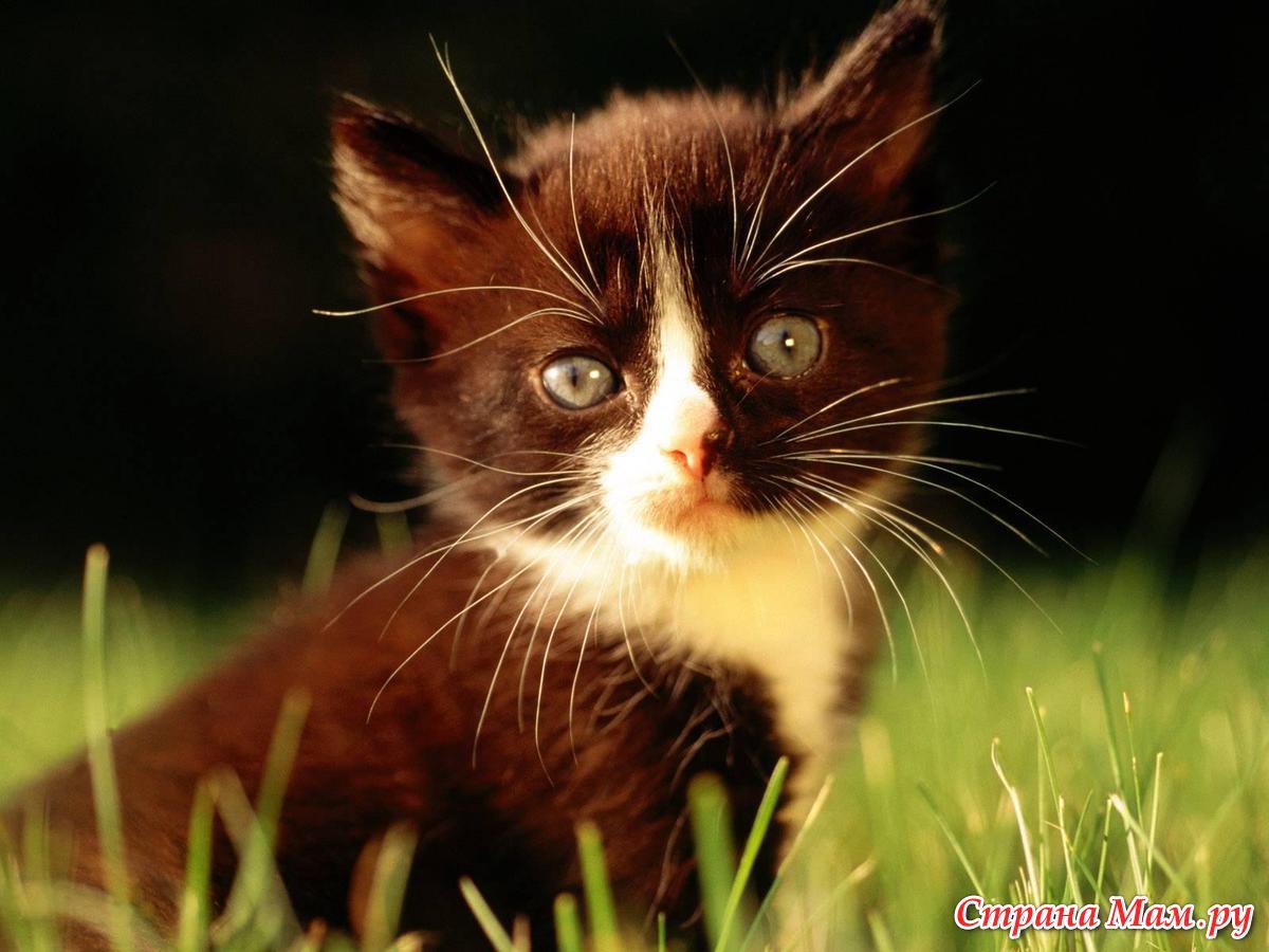 Как коты находят дорогу обратно