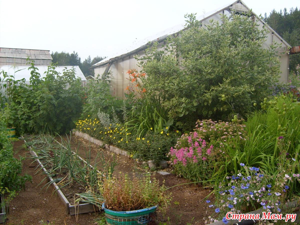 фото садовый цветах участок в весь