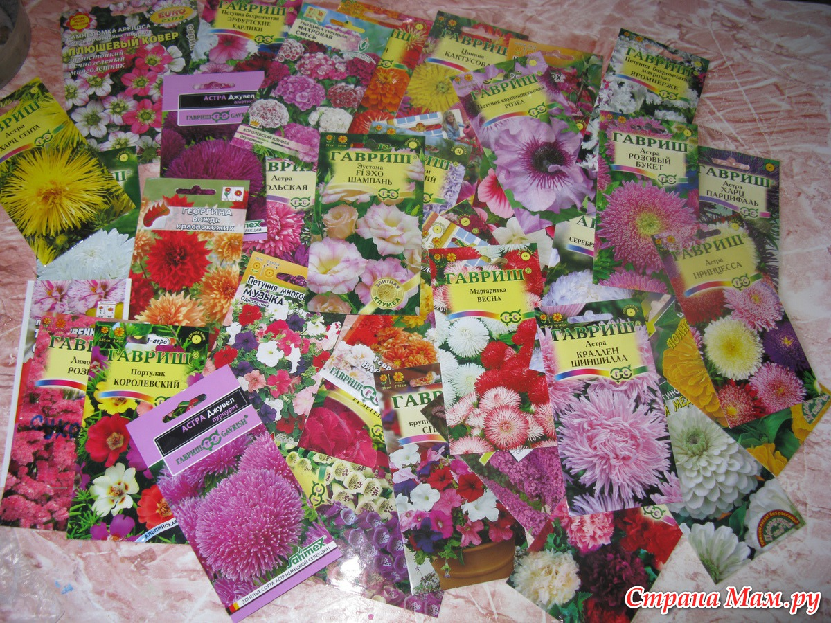 Картинки по запросу Цветочное безумие