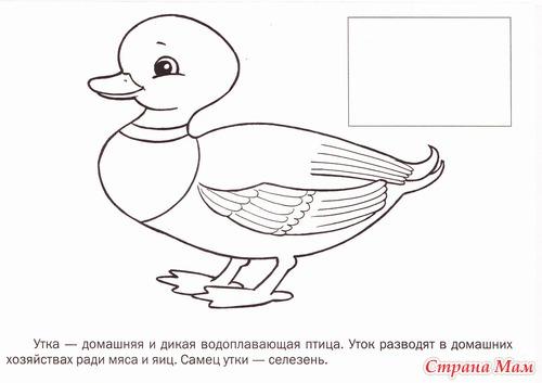 Раскраски птиц скачать бесплатно для детей