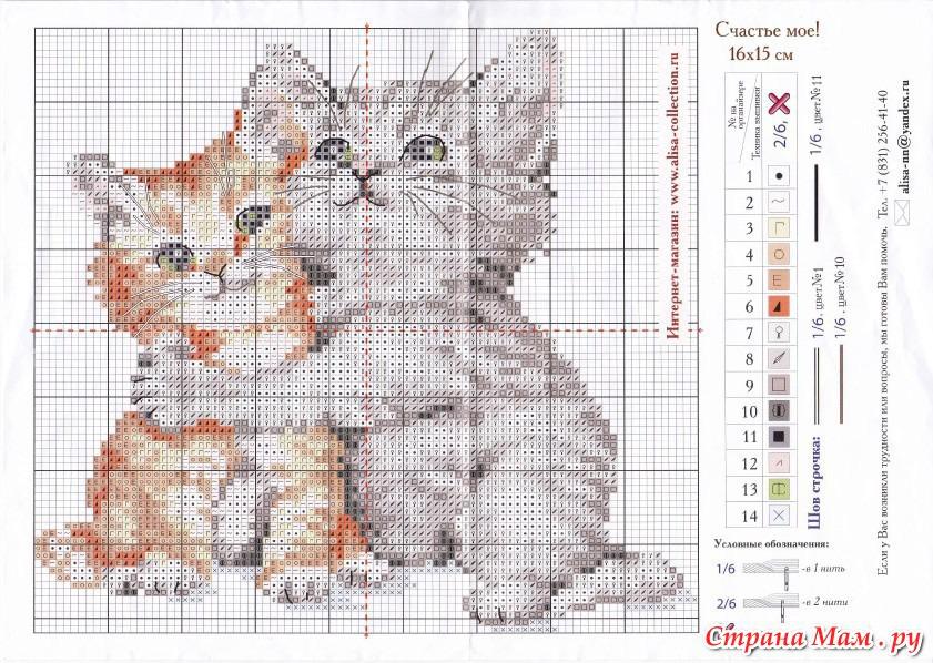 Розыск котиков от фирмы Алиса