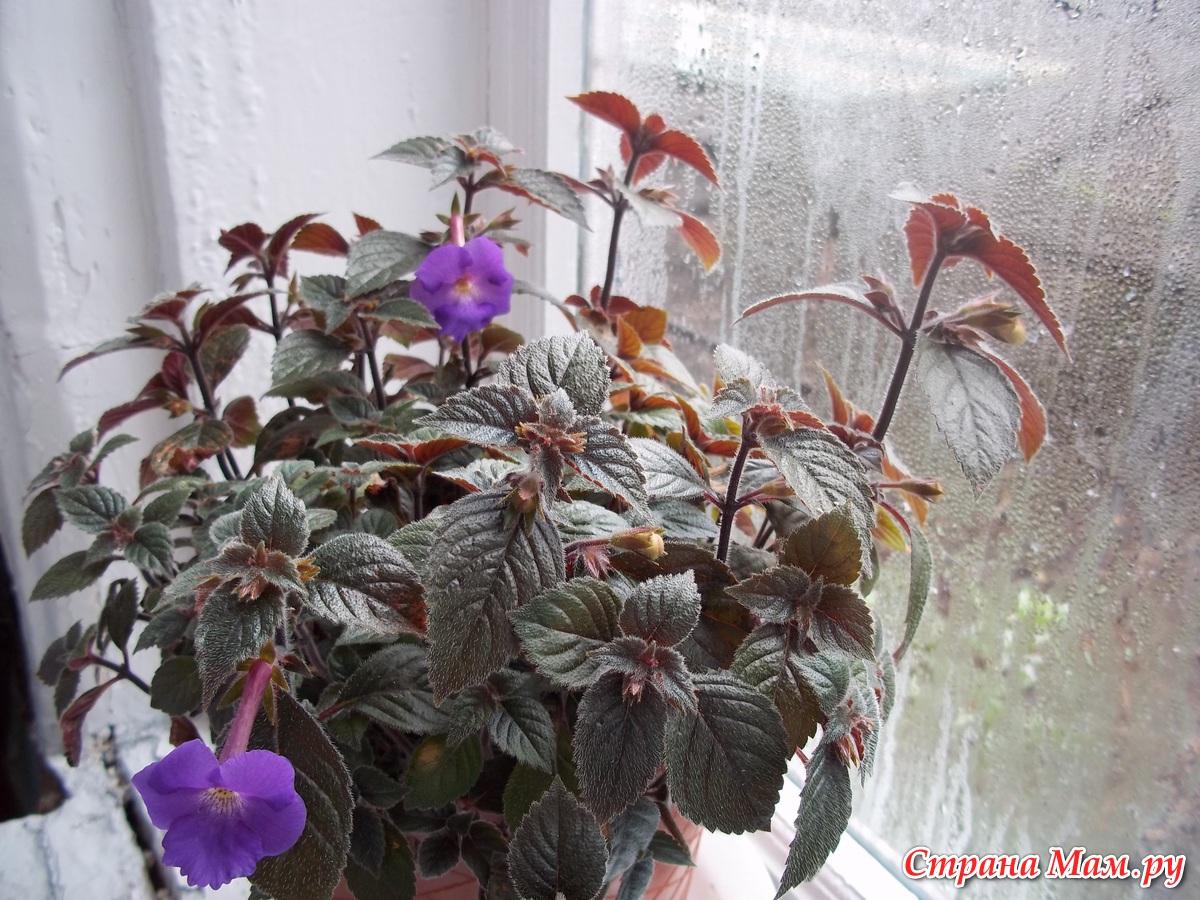 Веселая семейка - Комнатные растения. - Страна Мам