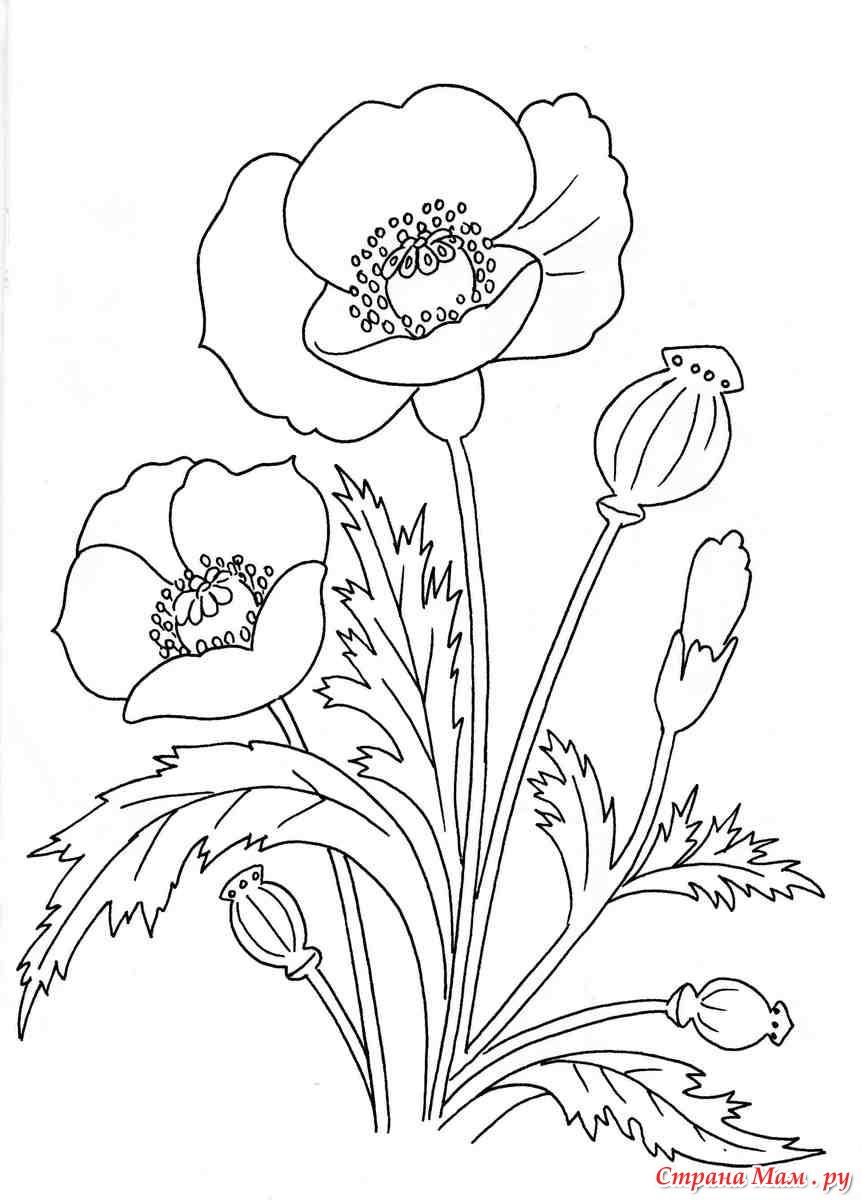 Раскраска полевых цветов