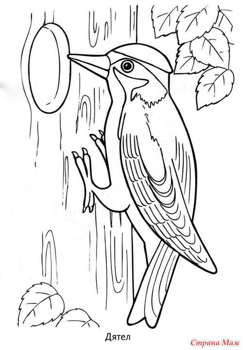 Картинка птиц раскраска