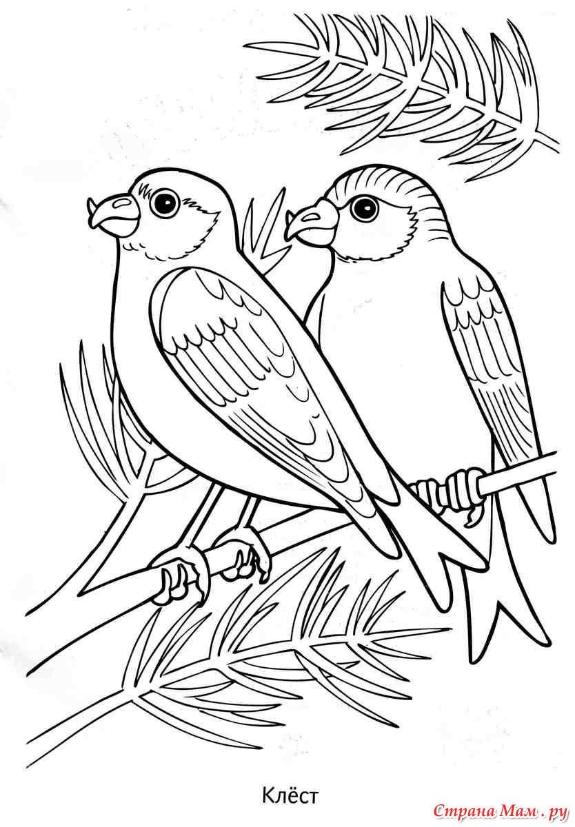 Картинки раскраски зимующих птиц