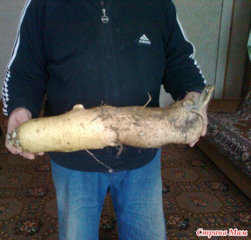 История земледелия в отдельно взятом огороде. Часть 2. Овощи.